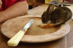 A rabbit eats bread.