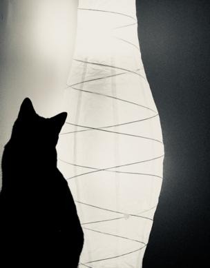A cat silhouetted in front of a lamp