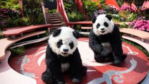 people in panda costumes perform