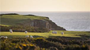 Sheep on Gower