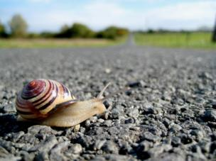 A snail on the pavement.