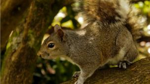A squirrel at Swansea's Singleton Park, by Howell Morris