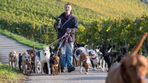 Dogs dey stroll