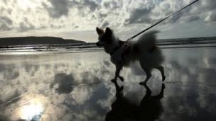 Dog on Broad Haven beach