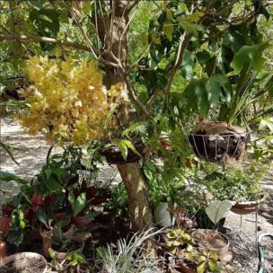 Orquídeas y otras plantas en una finca