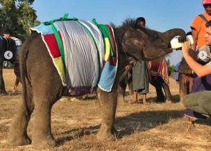 اونی جمپر میں ہاتھی کا بچہ