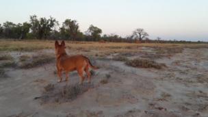 كلب في البرية