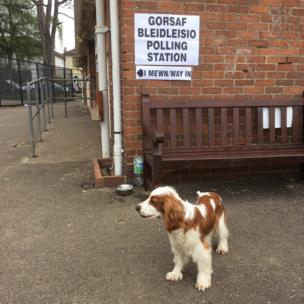 Dyddgu the spaniel Victoria Park polling station
