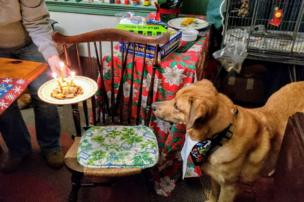 A dog stares at a plate of leftovers with candles on it