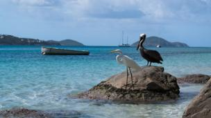 Storks sit on a rock by the sea