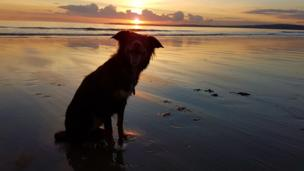 Smidge the dog at Aberavon beach at sunset