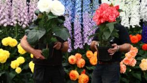Gardeners prepare a display of begonia and delphinium flowers