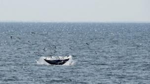 วาฬบรูด้า ในทะเลอ่าวไทย