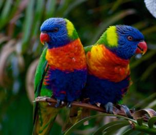 Two colourful birds