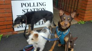 Rocket, Mabon and Bran at a polling station