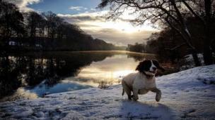 Dog in snow at Portglenone forest