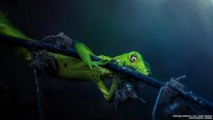 ઈગ્વાને નામનાં પ્રાણીનો ફોટા