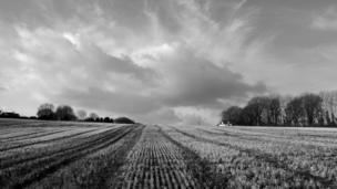 Field in sun, in black and white, near Llangwm, Pembrokeshire