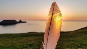 Feather near beach
