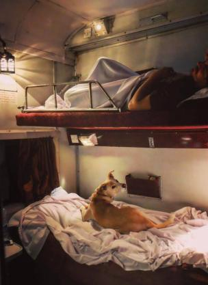 A dog sits on the lower berth inside an air conditioned car in the train.