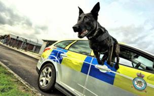 Un perro llamado Baco salta fuera de un auto por la ventana.