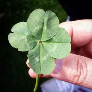 Trébol de cuatro hojas