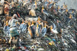 storks and people foraging in a dump
