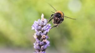 Bumblebee by Susan Dobbs, Bridgend