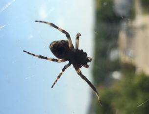 A spider missing a leg