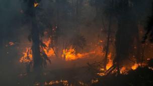 Yangın ağaçları sarmaladı.