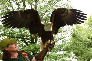 A conservation worker holds a bald eagle during a public demonstration