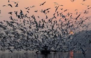 طيور النورس محتشدة فوق رجل