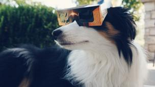 Andrew, a dog, wears protective eyewear