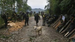 A Farc rebel and a dog walk along a path flanked by rebels resting in Cauca province, in Colombia on 31 January 2017.