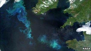 Algal bloom off British Isles