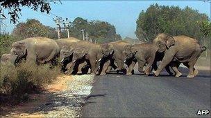 Herd of elephants near Bangalore