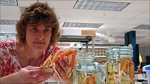 Dr Martha Nizinski measures a crab