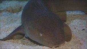 Shark at Weymouth Sea Life Centre