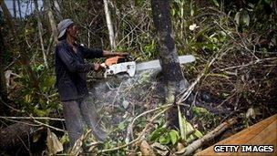 An illegal logger cuts down trees in Indonesia