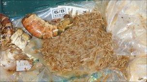 Maggots found by inspectors