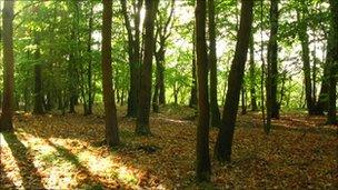 Woodland (generic)