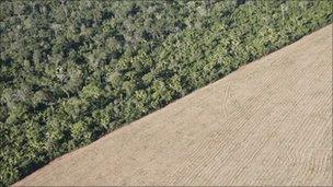 Aerial view of soy fields and forest in the state of Mato Grosso - 2008