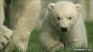 Walker as a cub. Image: Rhenen Zoo