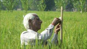 The pheromone spray is applied to crops in India
