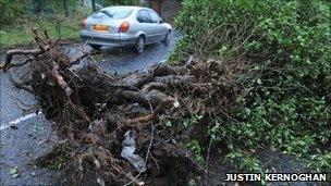 A fallen tree has blocked the Hannahstown Hill road in Belfast