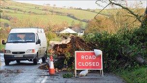 Fallen tree, Duncastle Road, Newbuildings, Co Derry