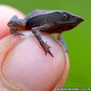 New species of beaked toad