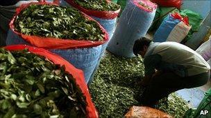 Coca leaves at Bolivian market (AP)