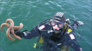 Diver with starfish