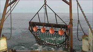 Scallop dredging